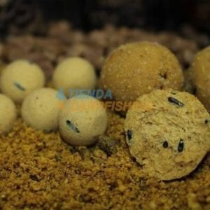 boilies sweet dream gold poisson fenag 300x300 - Boilies para carpfishing